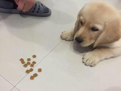 经常给狗狗吃零食的这些要注意喽.jpg